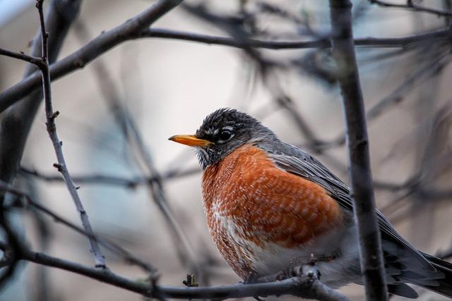Nature, Bird, Outdoors, Wildlife, Robin, Tree