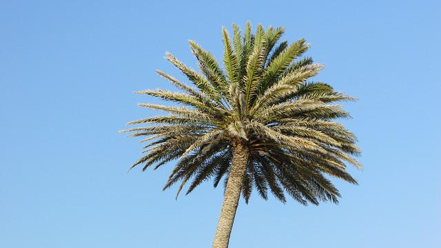 Palm, Sky, Tree, Cyprus, Ayia Napa