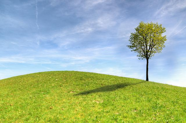 Tree, Panoramic, Grass, Nature, Landscape, Hayfield