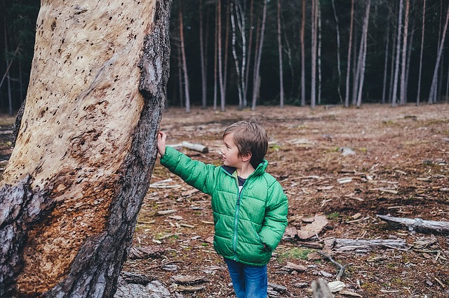 Child, Forest, Tree, Natural, Park, Nature
