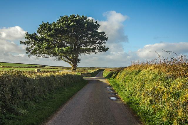 Tree, Path, Panorama, Wales
