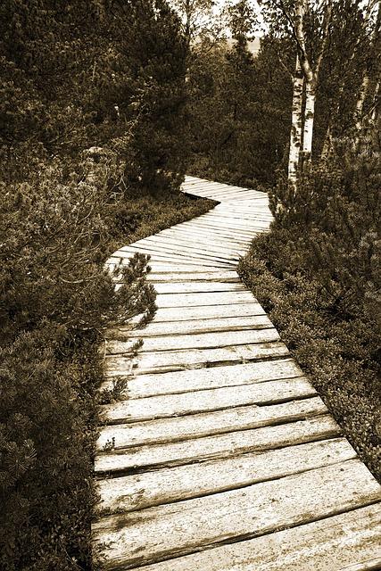 Path, Wooden, Wood, Sepia, Peat, Moor, Trees, Tree