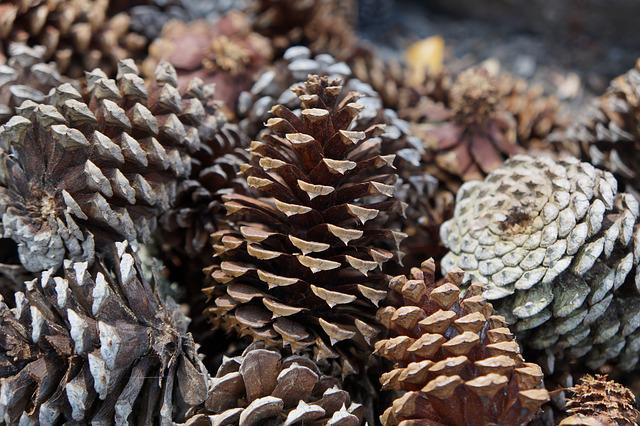 Nature, Wood, Pine Cone, Tree, Fractal, Earth, Element