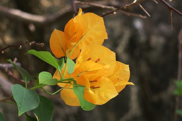 Nature, Plant, Leaf, Flower, Tree, Garden, Outdoor