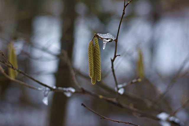 Nature, Tree, Tap, Plant, Winter, Ice