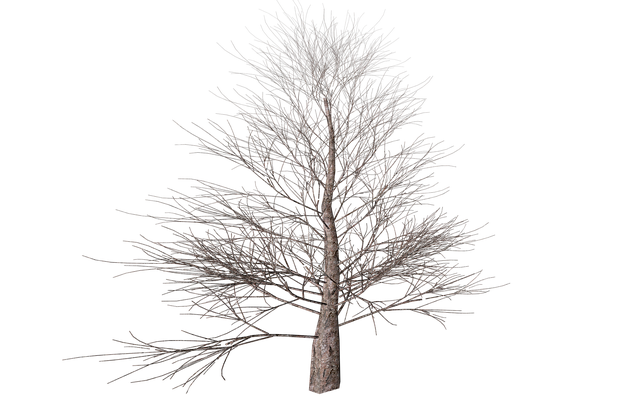 Tree, Png, Isolated, Autumn, Digital Art, Nature