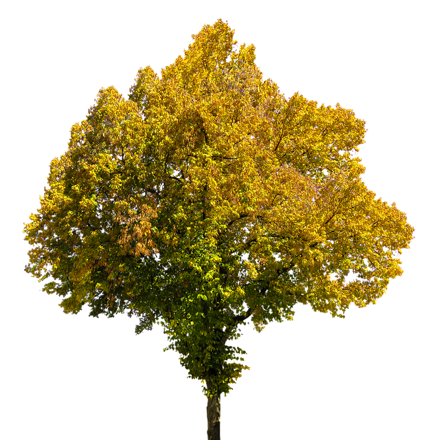Autumn, Time Of Year, Tree, Leaves, Png, Isolated