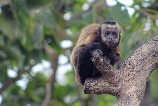 Mono, Primates, Tree, Nature, Ape, Animal World