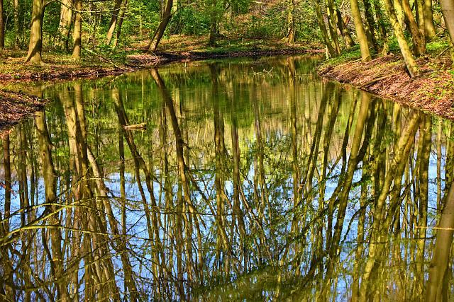Water, Pond, Reflections, Tree Reflections, Banks