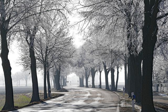 Tree, Road, Nature, Winter, Ripe