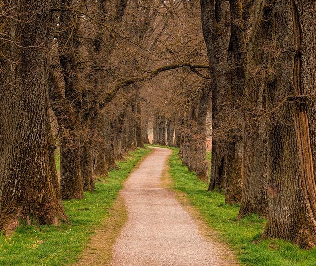 Tree, Wood, Landscape, Road, Away, Path, Avenue, Nature