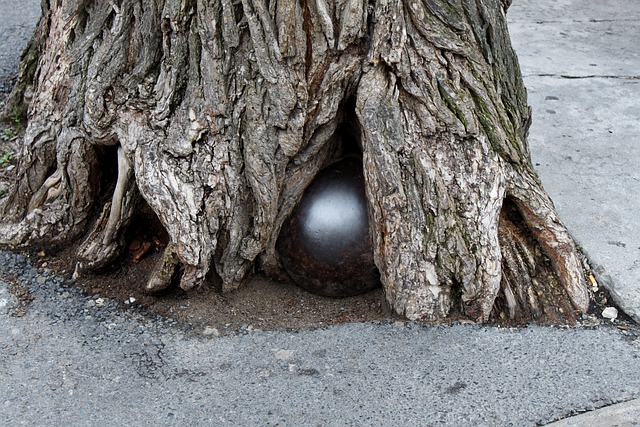 Cannonball, Root, Tree