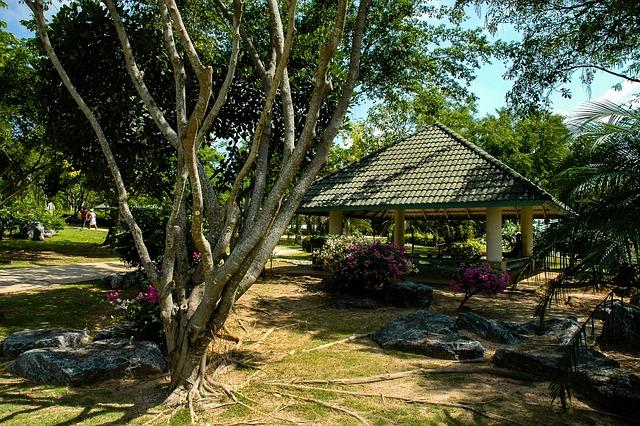 Tree, Tree Roots, Hut