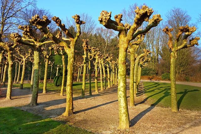 Pollarded Willow, Pollards, Willow, Tree, Row, Garden