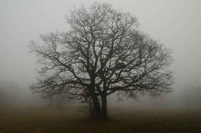 Tree, Branches, Fog, Solitude, Shade, Earth, Autumn