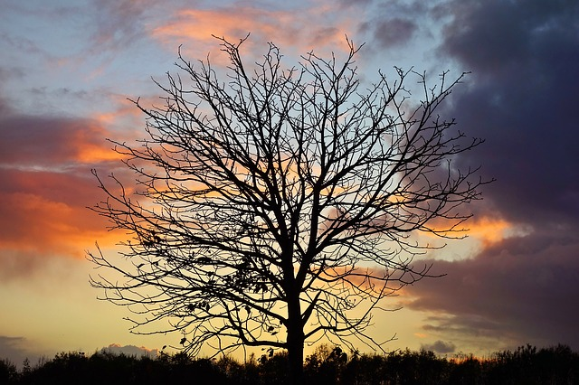 Tree, Branch, Bare Tree, Silhouette, Tree Silhouette