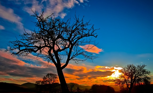 Tree, Silhouette, Sunset, Dusk, Bare Tree, Landscape