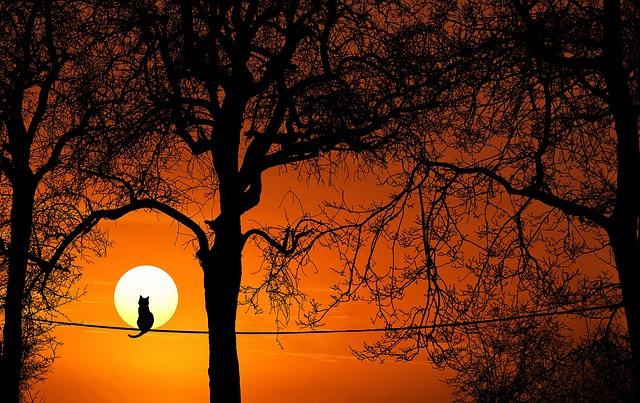 Tree, Sunset, Dawn, Dusk, Silhouette, Nature, Sun