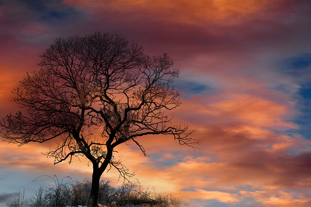 Dramatic Sky, Clouds, Tree, Silhouette, Sunset