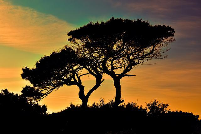 Trees, Sunset, Silhouettes, Tree Silhouettes, Branches
