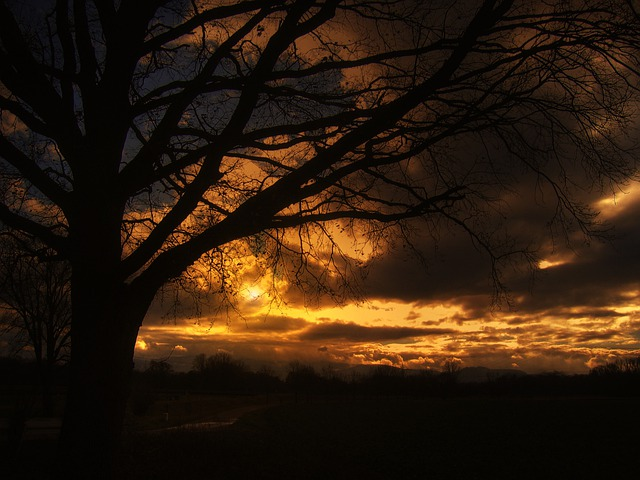 Tree, Sunset, Beautiful, Sky, Clouds, Golden, Still