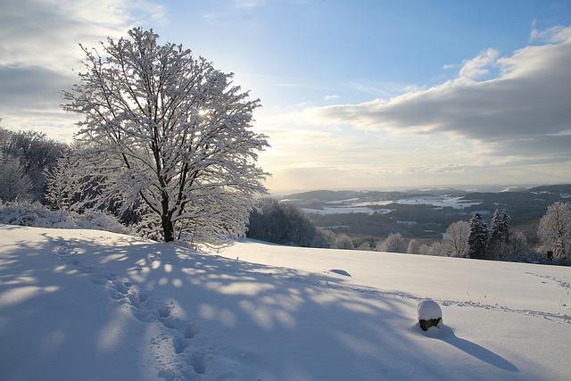 Snow, Winter, Cold, Frost, Frozen, Tree, Landscape