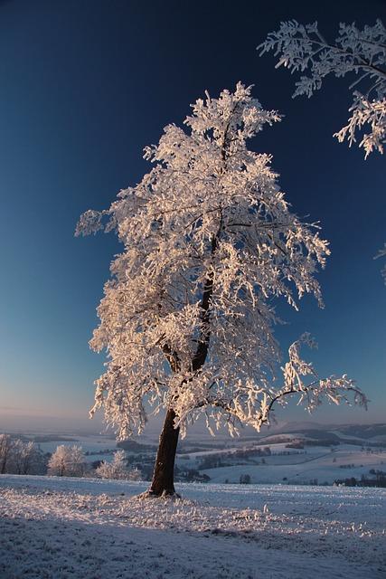 Tree, Sunset, Winter, Snow, White, Freezing