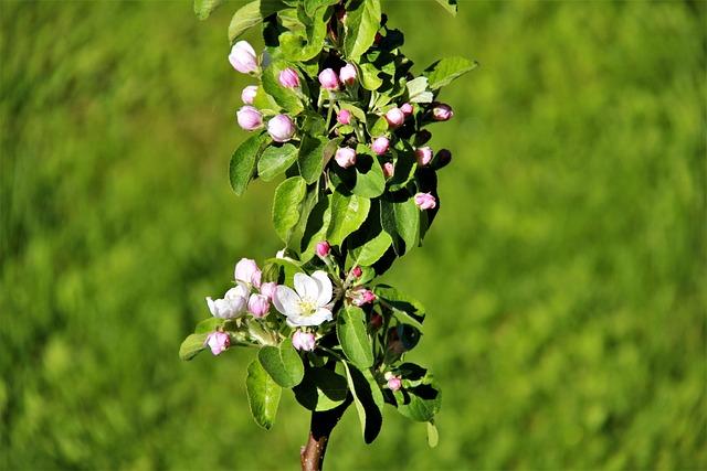 Spring, Bloom, Nature, Flowers, Apple Tree, Tree