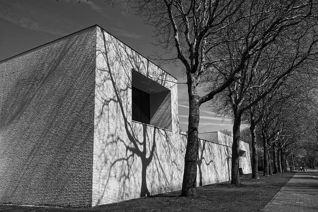 Building, Wall, White Wall, Shadow, Tree, Street, Urban
