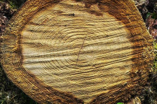 Tree, Wood, Rings, Like, Annual Rings, Structure, Log