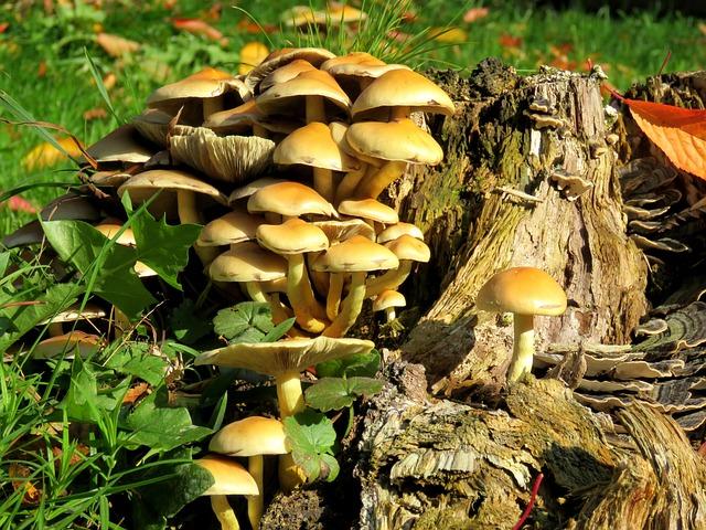 Mushrooms, Tree Stump, Autumn, Log, Morsch, Tree Fungus
