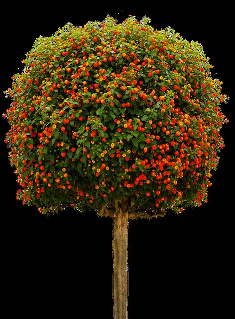 Nature, Tree, High-stem, Lobelia, Isolated, Summer