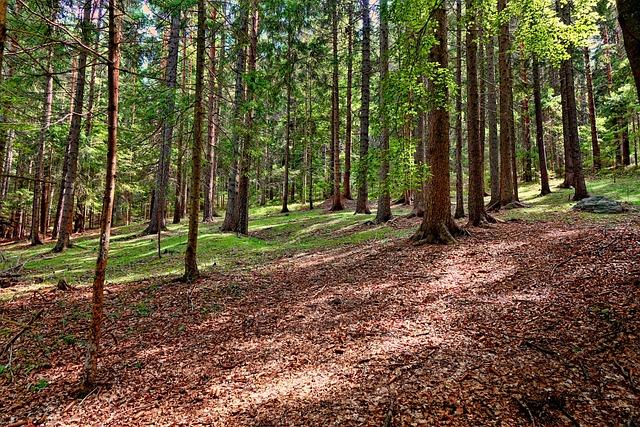 Wood, Nature, Forest, Summer, Tree, Landscape