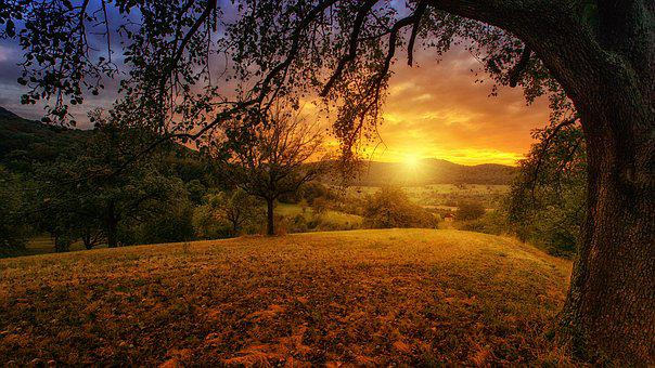 Nature, Tree, Dawn, Landscape, Panorama, Sun, Aesthetic