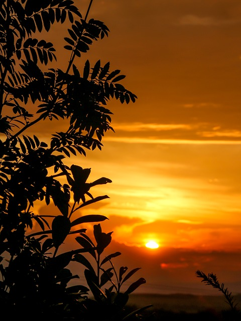 Sunset, Tree Silhouette, Tree, Sky, Golden Sky, Sun