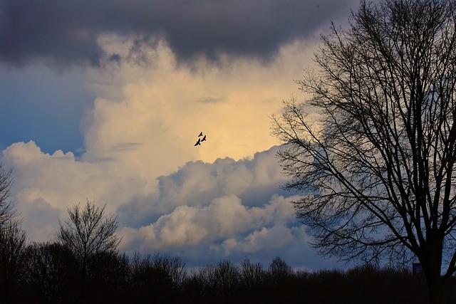 Sky, Clouds, Sunset, Sunlight, Tree, Mood, Bird