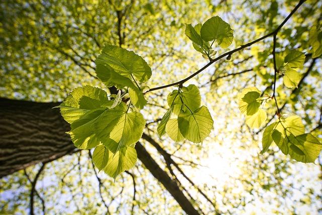 Green, Sunny, Tree
