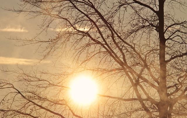Tree, Dawn, Morning Sun, Sunrise, Fog, Morning Mist