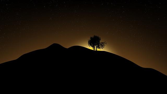 Sunrise, Silhouette, Tree, Willow