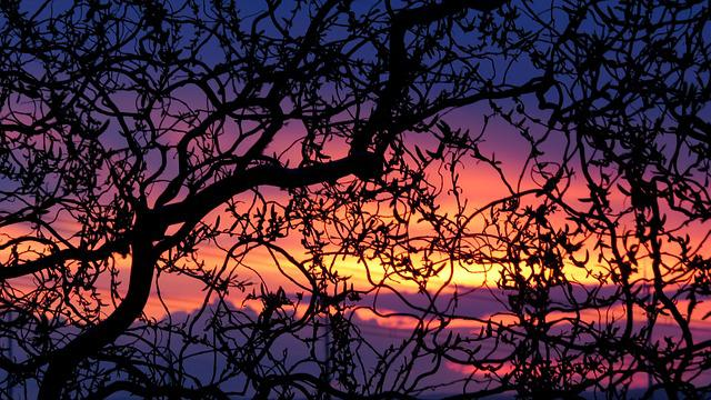 Spring Evening, Evening Sky, Sunset, Tree, Sky, Nature