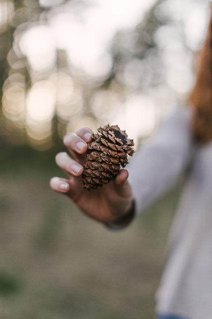 Pine Cone, Outdoors, Cone, Tree, Wood, Outdoor, Texture