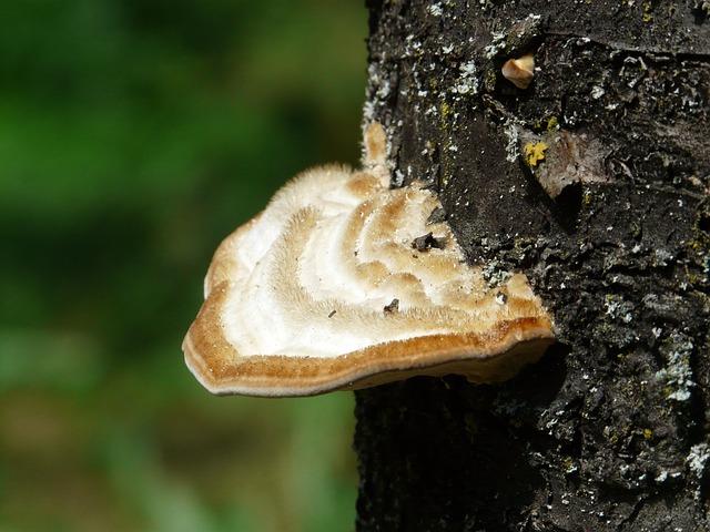 Male mushroom spunk
