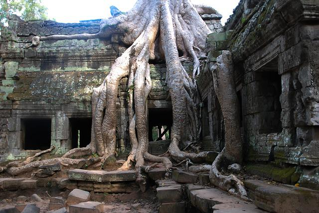 Angkor Wat, Tree, Tourism, Travel, Root, Tour, Cambodia