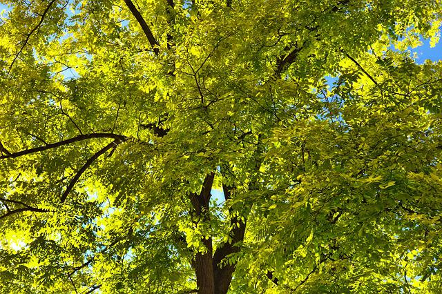 Tree, Tree Top, Branches, Foliage, Leaves, Green