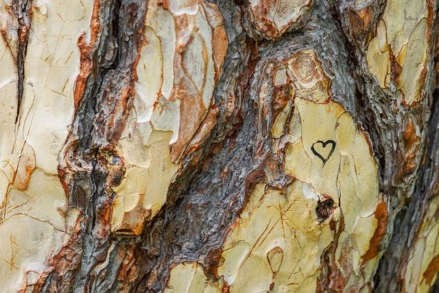 Tree, Austrian Black Pine, Pinus Nigra, Tribe, Wood