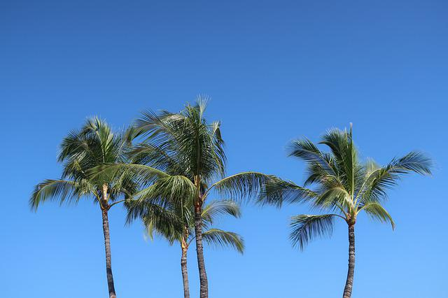 Palm, Tree, Beach, Tropical, Hawaii
