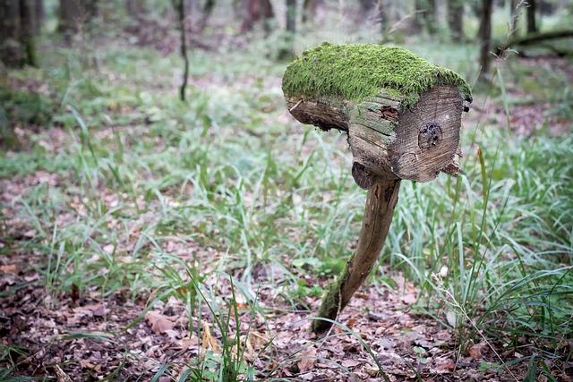 Tree, Trunk, Stump, Forest, Strange, Weird, Eye