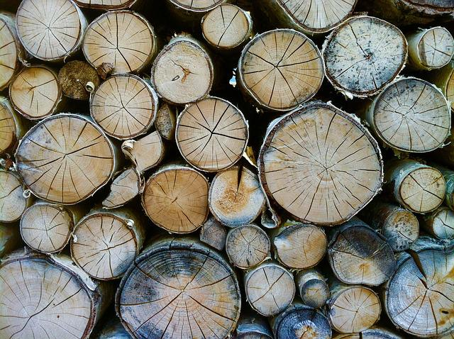 Wood, Tree Trunks, Annual Rings, Forest, Nature
