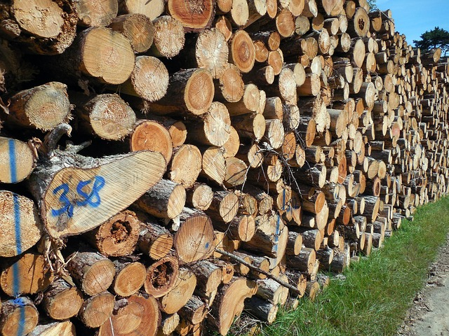 Wood, Tree Trunks, Forestry, Log, Timber Industry
