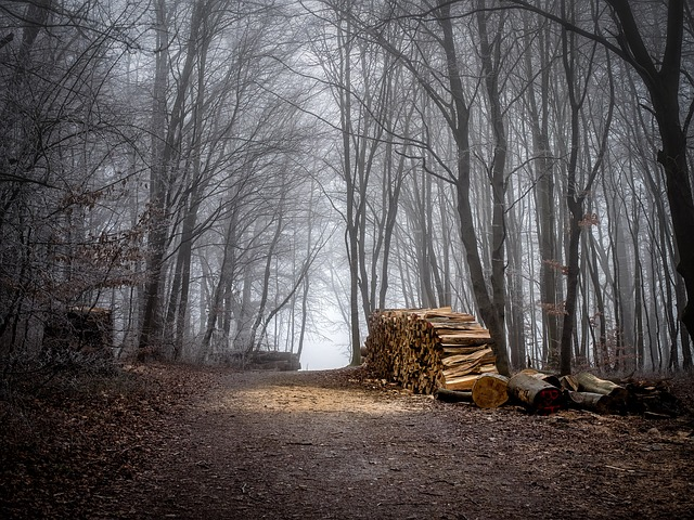 Forest, Wood, Forest Path, Nature, Tree Trunks